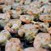 skewered_shrimp_on_grill1