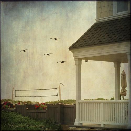 house texture beach porch beachhouse volleyballnet sunsetbeachcalifornia flickrdiamond lesbrumestextures selectbestexcellence sbfmasterpiece skeletalmessshadowhousecreationstexture