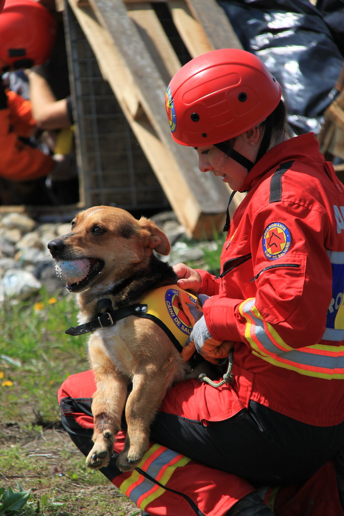 Romanian Rescue Dog Survives Attack By  Other Dogs