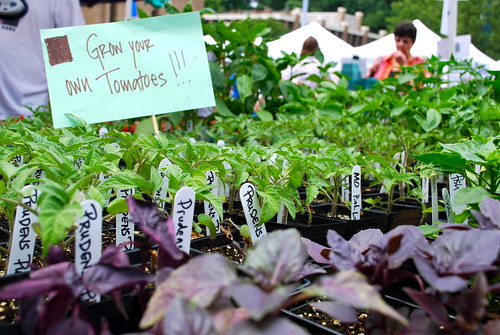 Tomato Plants on Sale