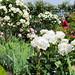 Le jardin des roses du château de Compiègne ©Fabien Pfaender
