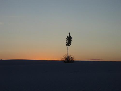 sunset flower sand dune