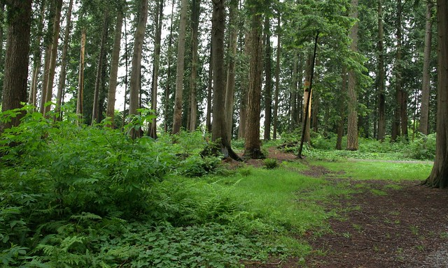 Woods_4289
