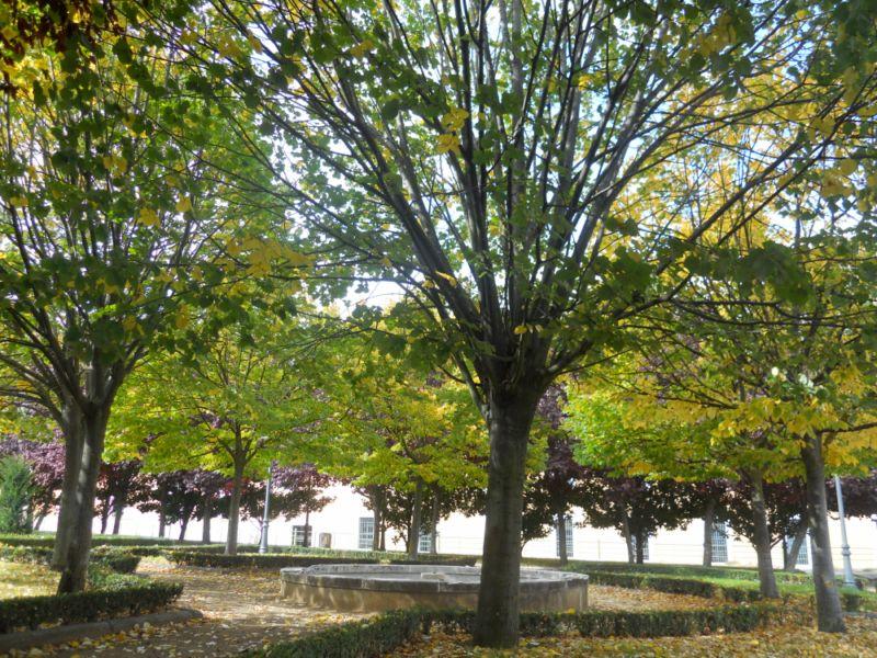 Tilo en otoño 4