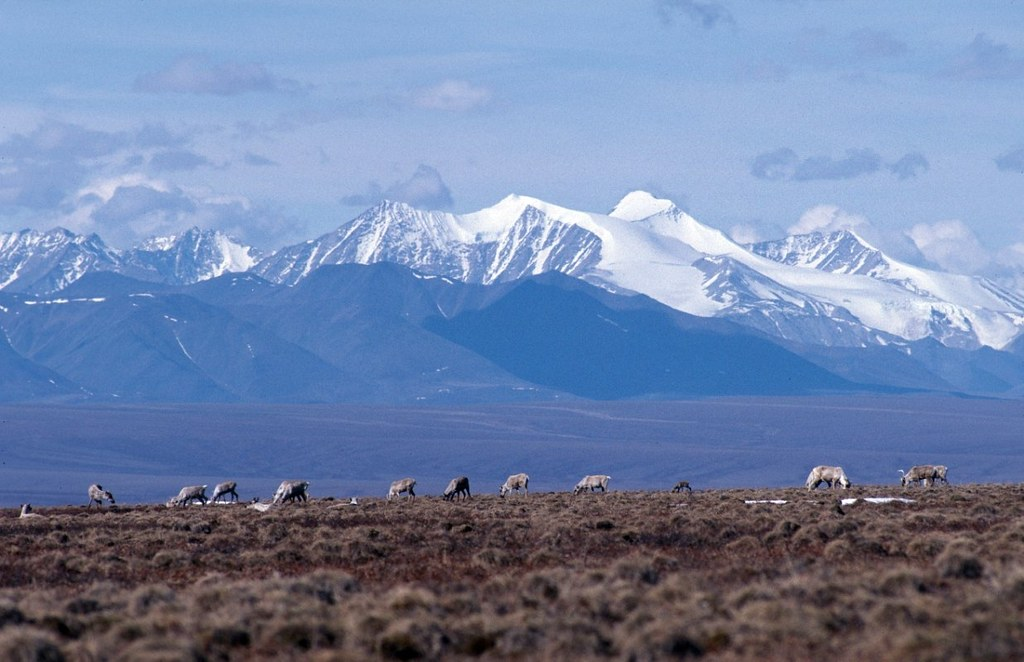 Action needed: to honor 50th anniversary, Congress must protect more wilderness