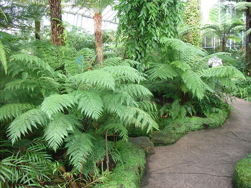 Real jard n bot nico de edimburgo tales of a wanderer for Jardin botanico edimburgo