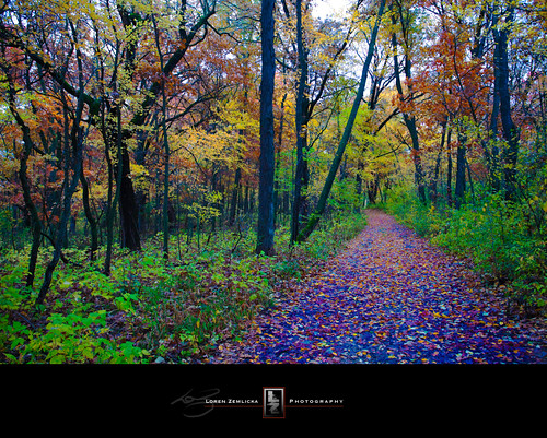 road autumn trees fall nature colors leaves wisconsin forest photography photo vanishingpoint woods october midwest image path picture explore trail madison distance 2009 canonef1740mmf4lusm cherokeemarsh canoneos5d flickrexplore lorenzemlicka