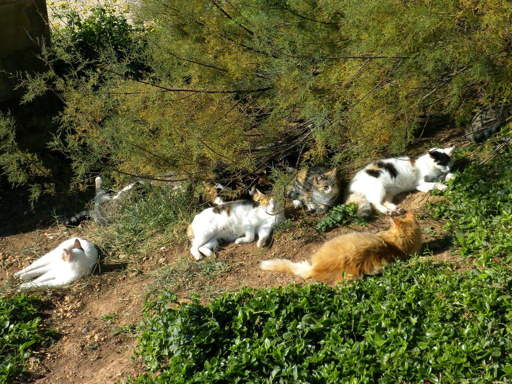 Cats at Wied iz-Zurrieq