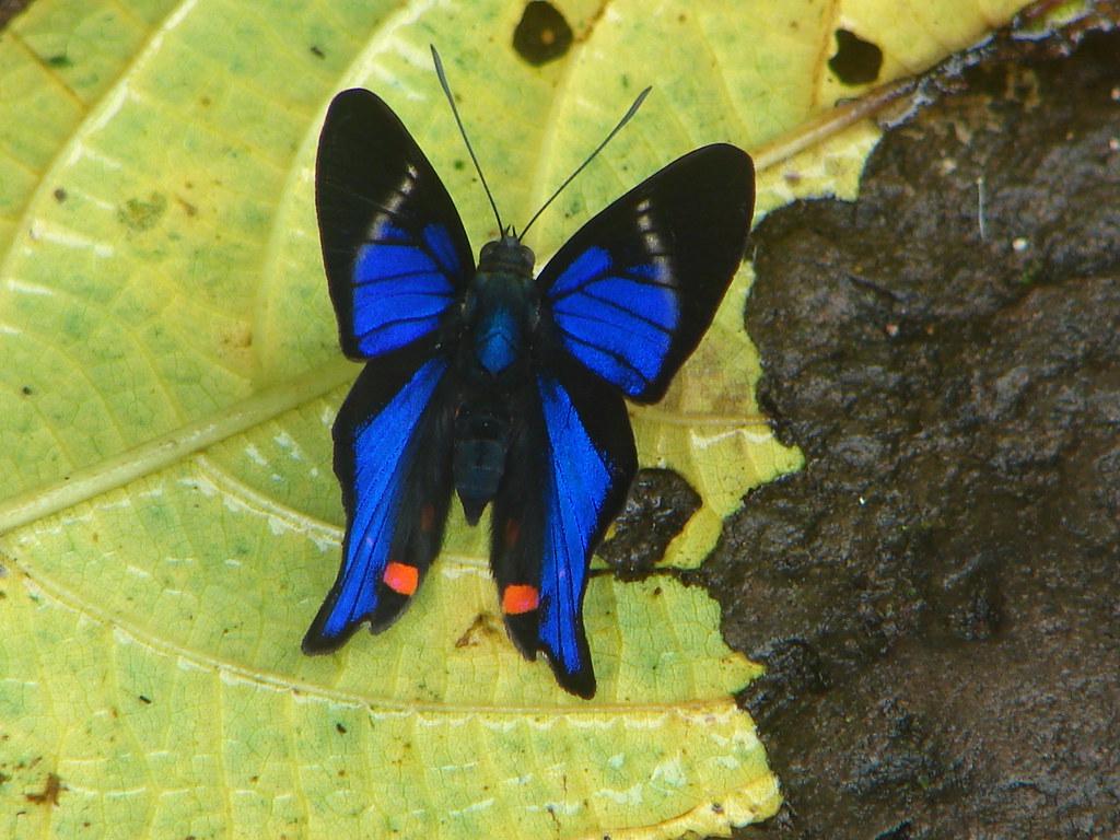 Mariposas 2010 - Cataratas del Iguazú