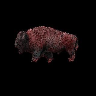 bison7