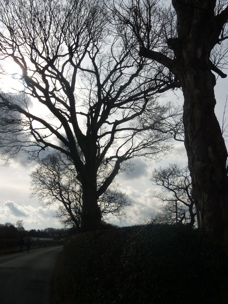 Trees Stonegate to Robertsbridge