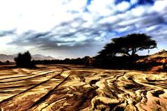 ARABIAN DESERT ...