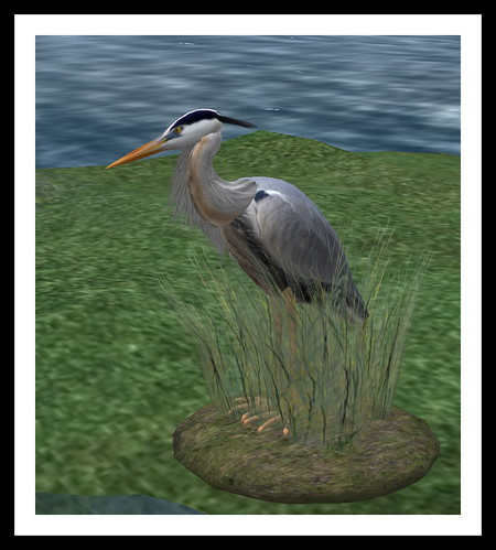 Heron in Second Life