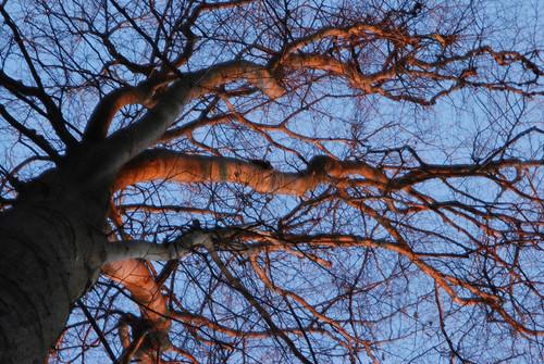 Auprès de mon arbre, je vivais heureux ...