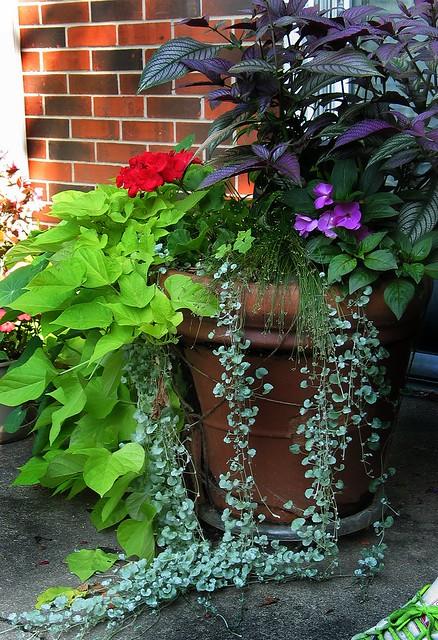 potted arrangement..
