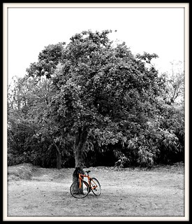 Orange Bike & Tree