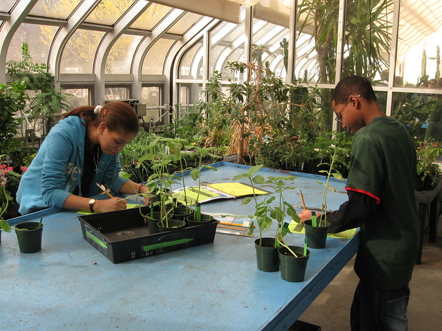 Students from the Brooklyn Academy of Science and the Environment High School work in the Education Greenhouse.
