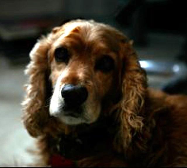 Dodge Dog Flickr Photo Sharing