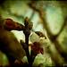 L'Ape non è impaurita da me _ The Bee is not afraid of me by ❤ Lilli ❤ OFF