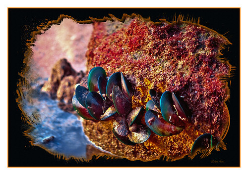 Mussels........ - from the seashore..!