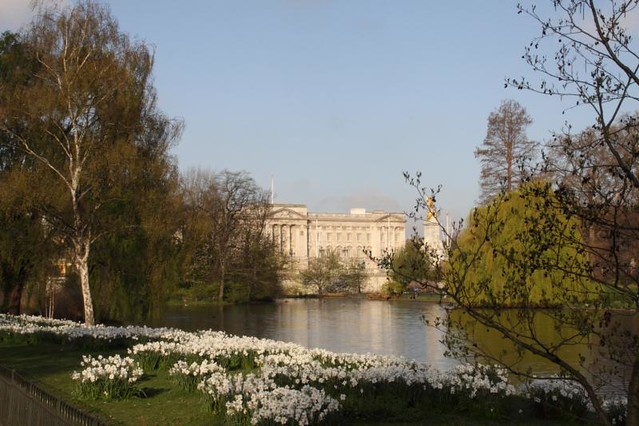 2010-04-16-038 V1 London Royal Parks St James Park Buckingham Palace Lake & Narcissi