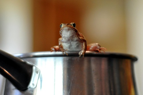 frog in a pot 3