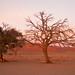 Südafrika-6254