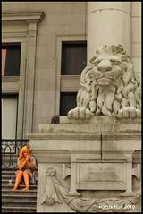 Lion Candids