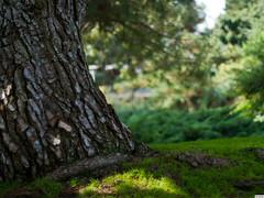 Cal State Fullerton Arboretum