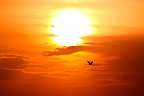morning sky sun bird clouds seagull flight greece crete rethymno κρήτη ελλάδα σύννεφα πουλί πτήση πρωί ρέθυμνο ουρανόσ ήλιοσ γλάροσ