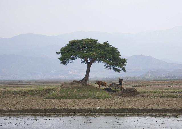 Countryside - North Korea