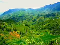 agriculture, field, mountain, valley, tree, nature, mountain range, hill, hill station, highland, green, ridge, forest, natural environment, plateau, terrace, meadow, landscape, wilderness, vegetation, rural area, grassland, plantation, mountainous landforms,