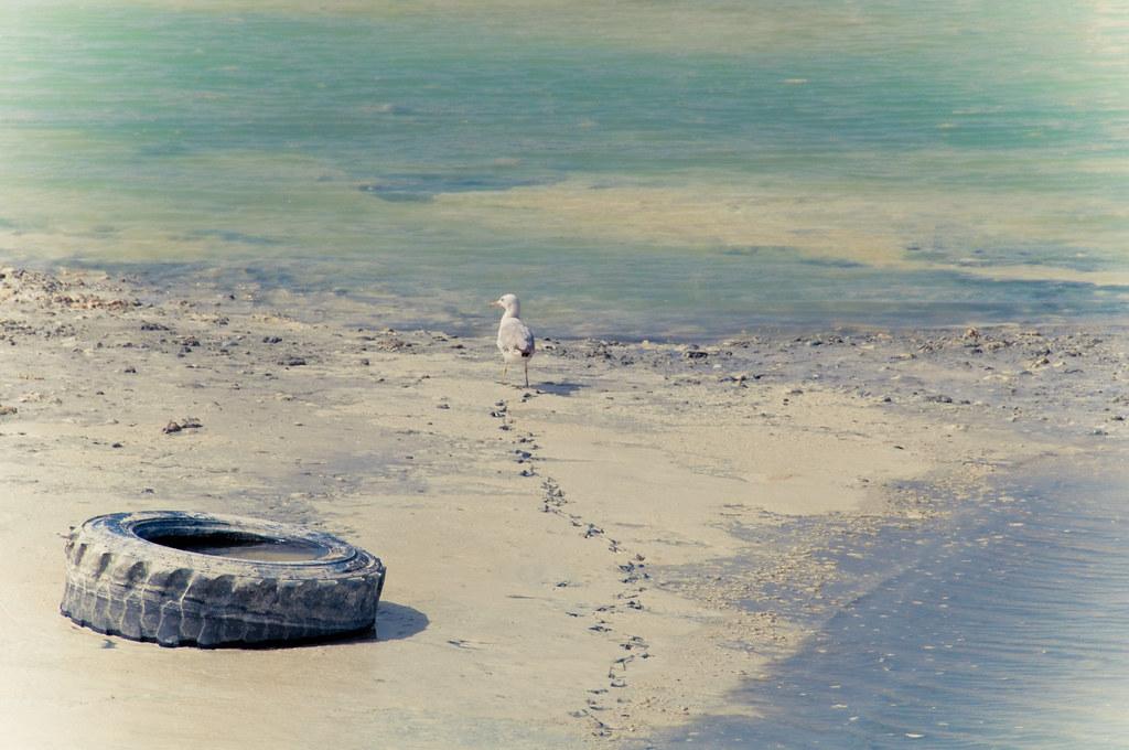 Bird with a Tire by christian.senger