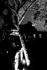 un arbre dans la nuit - Photo of Montagnac-d'Auberoche