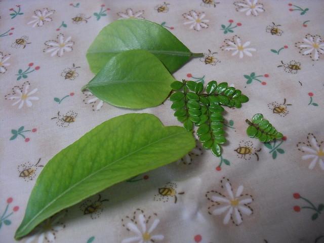 柠檬树叶和胡椒叶