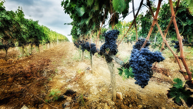 Винодельня в Италии
