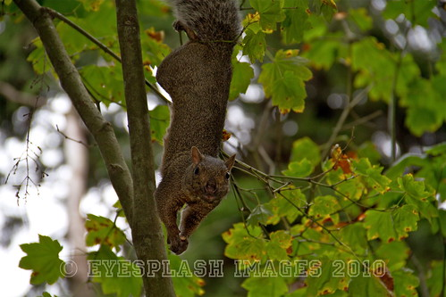 Hanging out and looking for some nuts