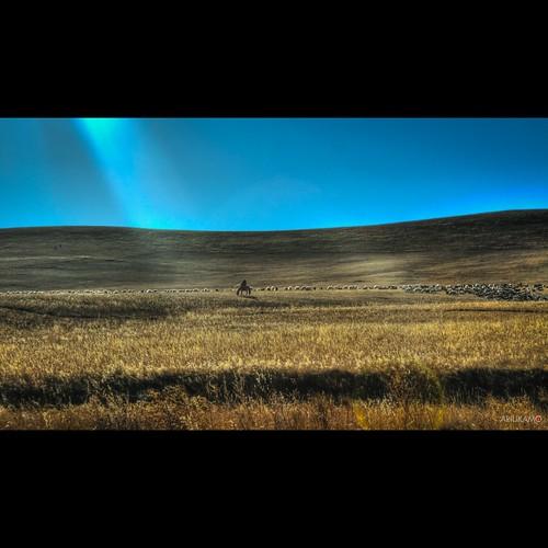 autumn mongolia mongolian