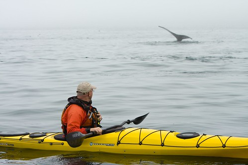 Whale and Kayaker