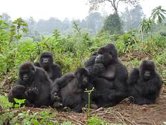 Rwanda-Volcanoes NP