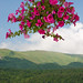 A generous flowering plant hanging before hills