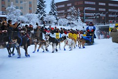 nordic skiing(0.0), dog(1.0), winter(1.0), vehicle(1.0), snow(1.0), pet(1.0), mushing(1.0), dog sled(1.0), sled dog racing(1.0),