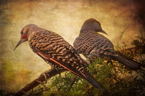 Flicker Pair