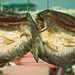 Fish skins