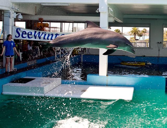 Clearwater Marine Aquarium 1 Flickr Photo Sharing