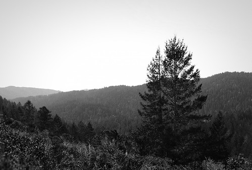 Pine Tree Overlooking Valley