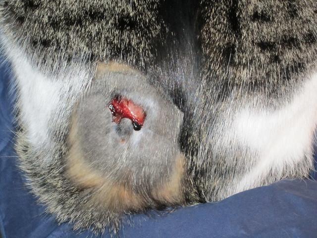 Cat fight scratch wounds
