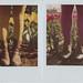 tulip feet by taylorboren