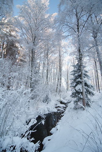 winter snow forest canon 5d tokina1116mmf28