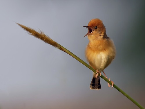 The Singing Small Bird